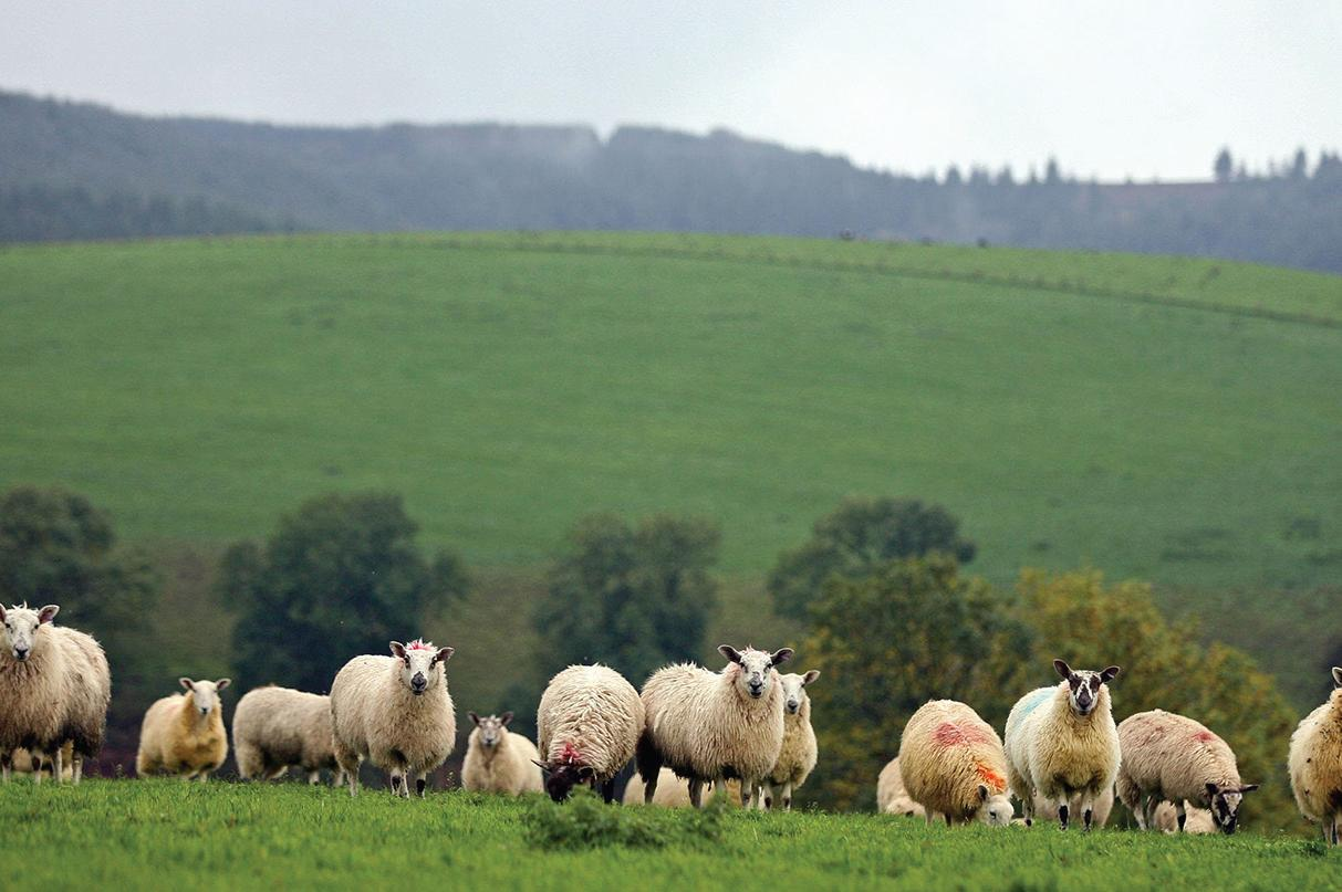 Farmers can have an influence on election: A close eye on political developments.