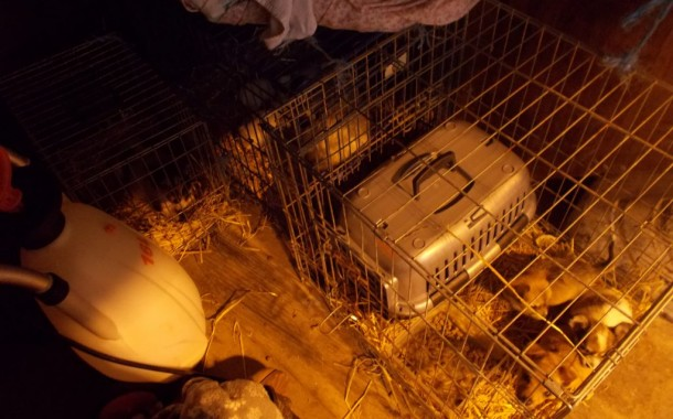 Police swoop finds caged dogs
